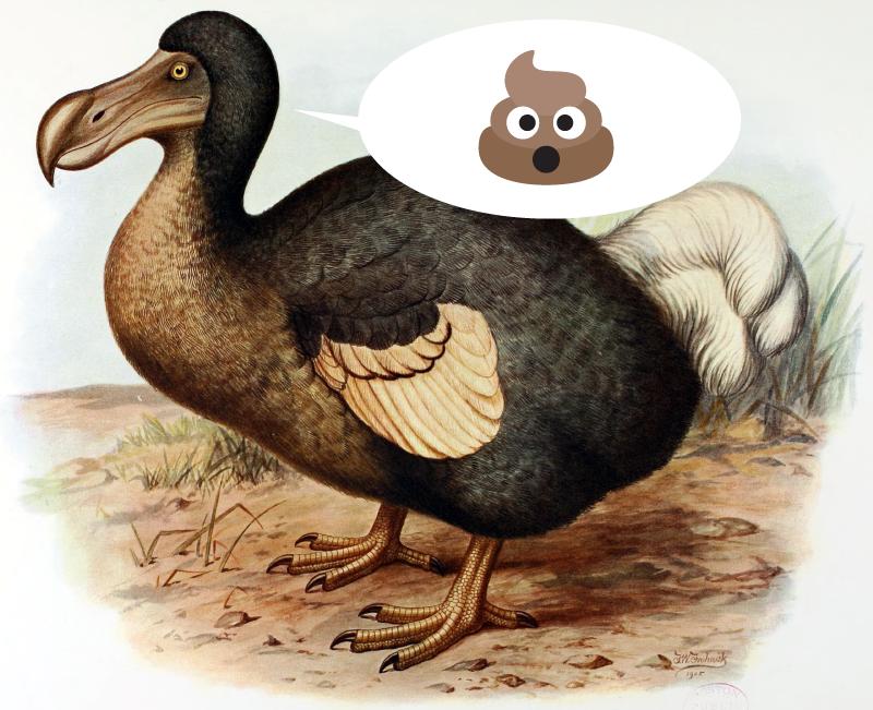 Ilustracja z ptakiem dodo